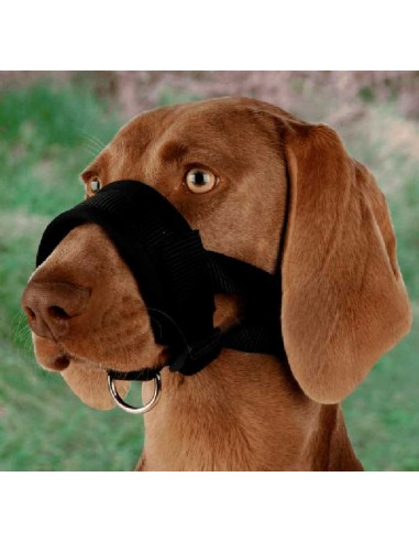 bozal lazo perro