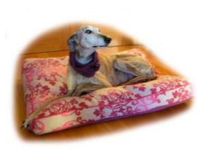 Lola en su cama especial para Galgos