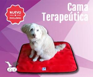 Nuevas Camas Especiales para Perros de Lucas & Lola