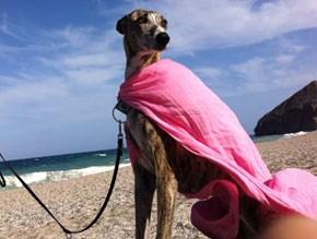 galgo-en-la-playa